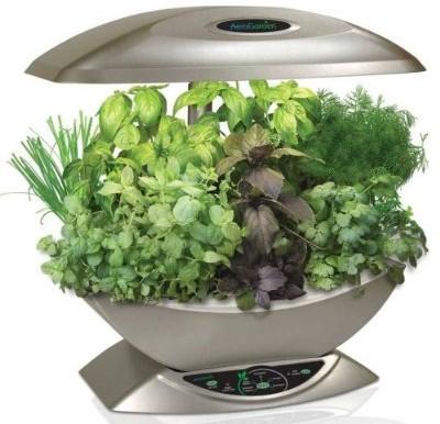 Herbs From The Aerogarden!