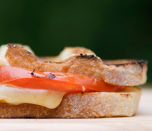 Grilled havarti cheese sandwich with tomato and fresh thyme