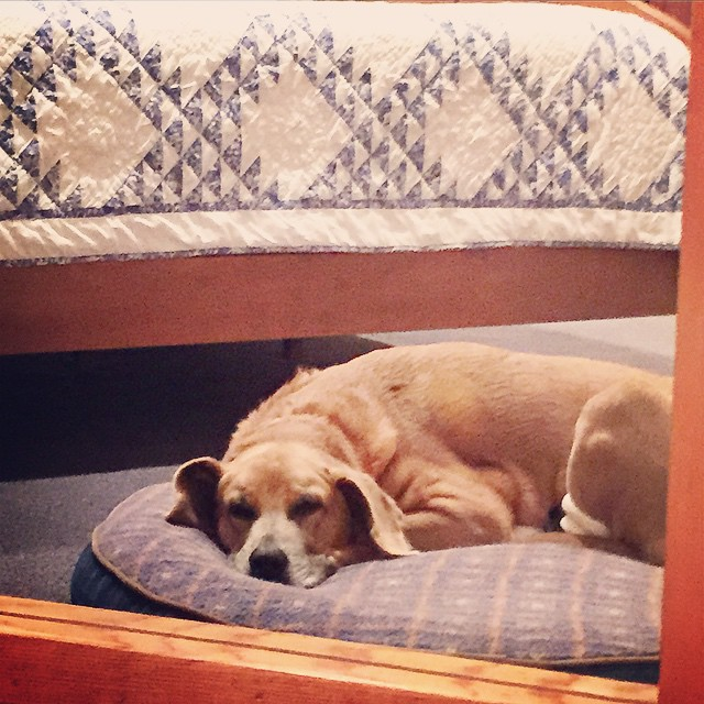 No, don't get up.  I'll just head on off to work while you sleep in.  #adogslife #instadog