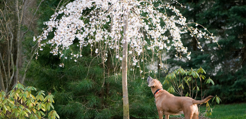 dog smelling the flowers!