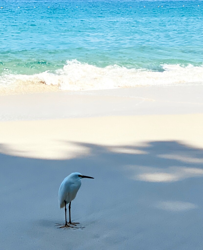sulky bird