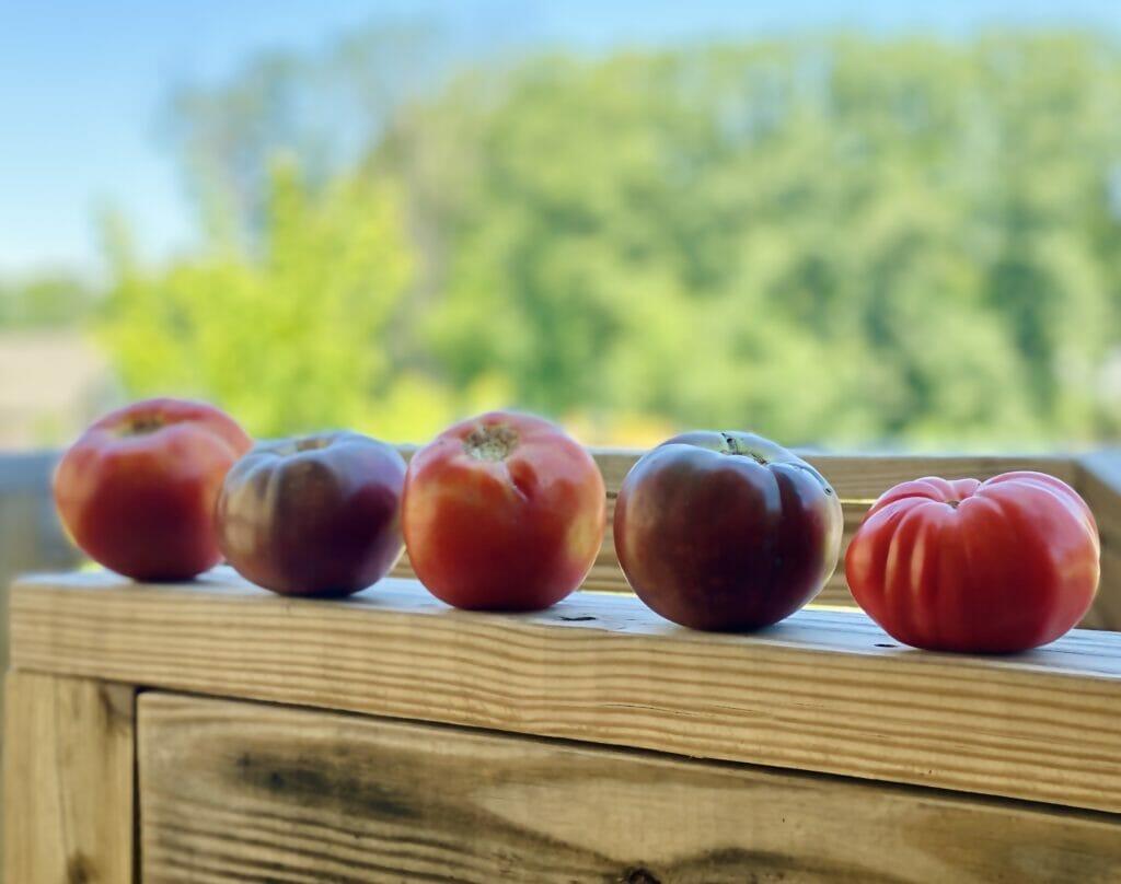 herloom tomatoes