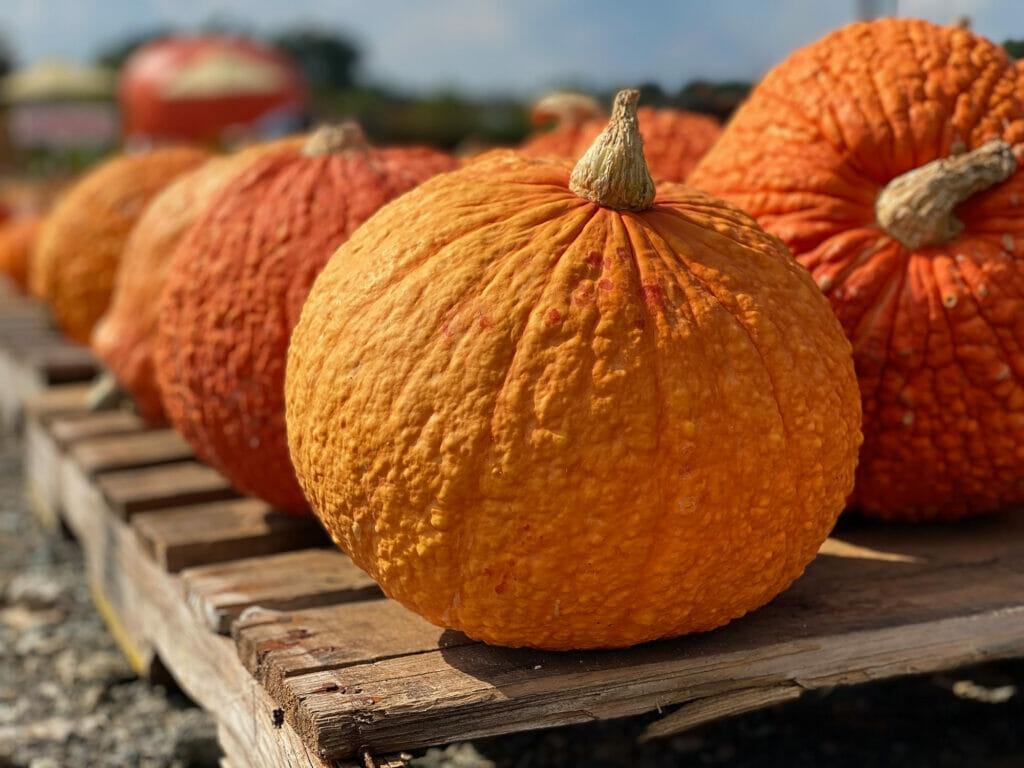 Ten Pumpkin and Butternut Squash Recipes